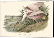 Roseate Spoonbill (light pink) Fine-Art Print