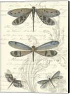 Dragonfly Delight I Fine-Art Print
