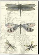 Dragonfly Delight II Fine-Art Print