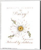 April's Flower, The Daisy Fine-Art Print