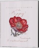 August's Flower, The Poppy Fine-Art Print