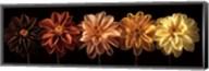 Floral Salute Fine-Art Print