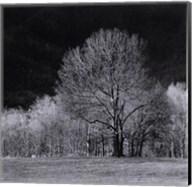 Cades Tree I Fine-Art Print