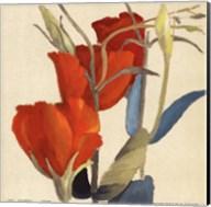 Red Grandiflorum Fine-Art Print