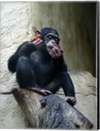 Orangutan - Burlap Hat Fine-Art Print