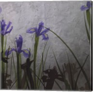 Blue Irises II Fine-Art Print