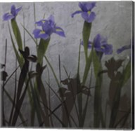 Blue Irises I Fine-Art Print