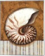 Vintage Shell I - mini Fine-Art Print
