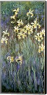 The Yellow Irises Fine-Art Print