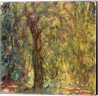 Weeping Willow green Fine-Art Print