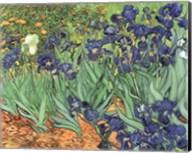 Irises, 1889 Fine-Art Print