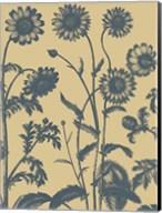 Chrysanthemum 1 Fine-Art Print