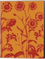 Chrysanthemum 15 Fine-Art Print
