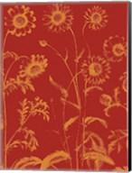 Chrysanthemum 16 Fine-Art Print