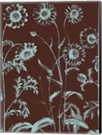 Chrysanthemum 17 Fine-Art Print