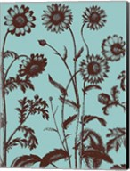 Chrysanthemum 18 Fine-Art Print