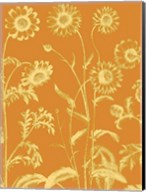 Chrysanthemum 20 Fine-Art Print