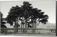 Cypress Trees and Balusters Fine-Art Print