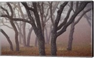 Pilot Road Trees Fine-Art Print