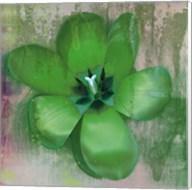 Tulip Fresco (green) Fine-Art Print