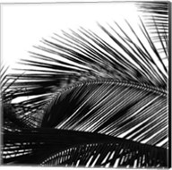 Palms 13 (detail) Fine-Art Print