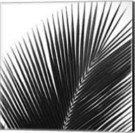 Palms 14 (detail) Fine-Art Print