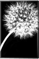 Dandelion Tilt Fine-Art Print