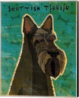 Scottish Terrier Fine-Art Print