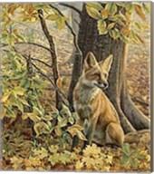 Eyes of Autumn Fine-Art Print