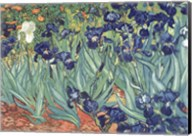 Irises in the Garden Fine-Art Print