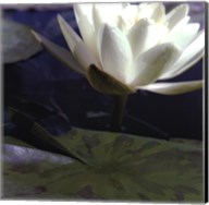 Water Lillies II Fine-Art Print