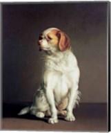 Portrait of a King Charles Spaniel Fine-Art Print