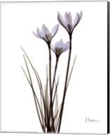 Blue Floral X-ray Rain Lily Fine-Art Print