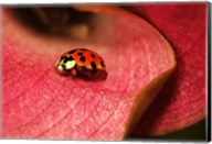 Ladybug On Leaves Fine-Art Print