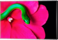 Smooth Green Snake on a flower Fine-Art Print