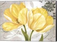 Colori Yellow II Fine-Art Print