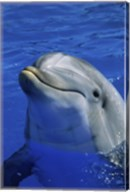Dolphins Sea World San Diego, California USA Fine-Art Print
