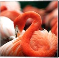Flamingo National Zoo Fine-Art Print