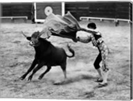 Matador fighting with a bull Fine-Art Print
