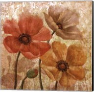 Poppy Allure I Fine-Art Print