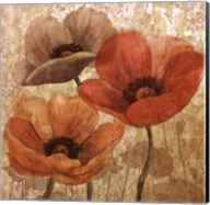 Poppy Allure II Fine-Art Print