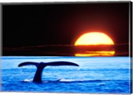 Tail fin of a whale in the sea Fine-Art Print