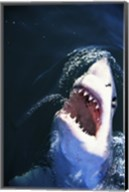 Great White Shark with its mouth open Fine-Art Print