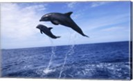 Bottle-Nosed Dolphins Sailing Above the Water Fine-Art Print