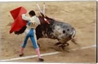 Matador fighting a bull, Plaza de Toros, Ronda, Spain Fine-Art Print