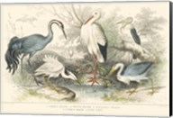 Herons, Egrets and Cranes Fine-Art Print