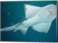 Shark Overhead Fine-Art Print