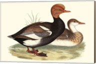 Red-Crested Whistling Duck Fine-Art Print
