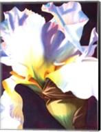 Blue Iris I Fine-Art Print