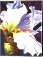 Blue Iris II Fine-Art Print